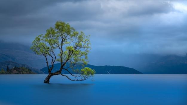 Árbol wanaka con vista al lago montaña