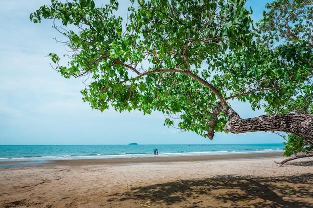 árbol y playa tropical
