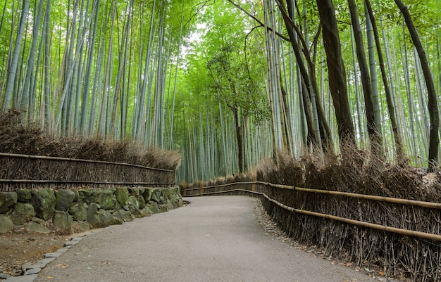 Arboleda de bambú verde en arashiyama en kyoto, japón