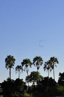 Árboles agua aves horizonte palma cielo zambezi