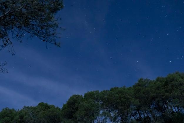 Árboles de ángulo bajo con fondo de cielo nocturno