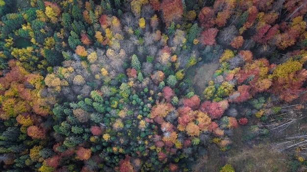 Los árboles del bosque desde la vista superior