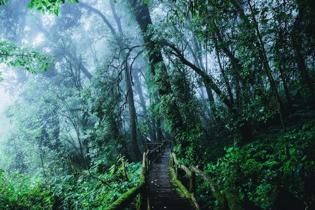 Arboles y bosques en la gama bosque lluvioso.