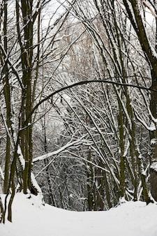 Árboles caducifolios sin hojas en la nieve después de ventiscas y nevadas, fenómenos naturales en la temporada de invierno con plantas y árboles sin hojas
