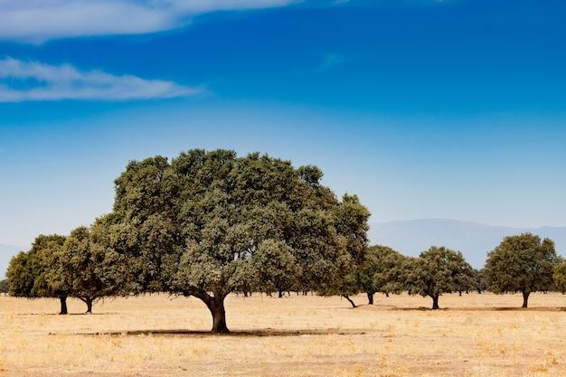 Árboles en el campo seco