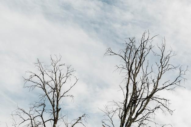 Árboles en un cielo nuboso