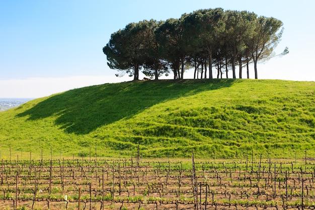 Árboles en la cima de una colina con pasto verde y plantaciones