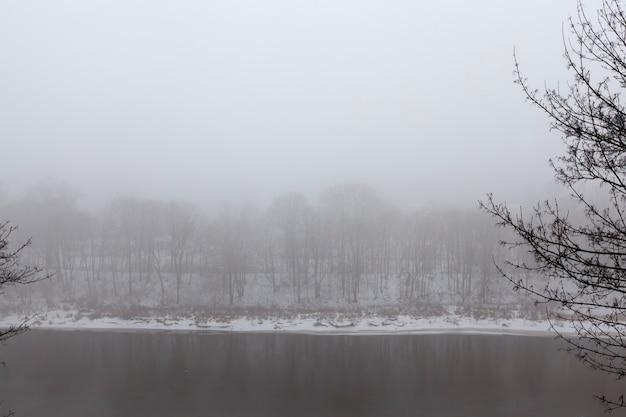 Árboles y clima frío invernal después de la nevada, ventisqueros y árboles en invierno, ventisqueros profundos y árboles después de la última nevada