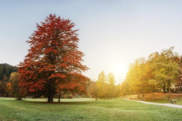 Árboles con coloridas hojas otoñales en un parque