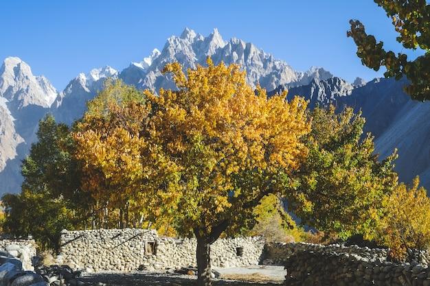 Árboles coloridos en la estación del otoño. pueblo de passu, baltistán, pakistán.