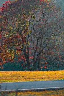 Árboles coloridos en la temporada de otoño, imagen de filtro vintage