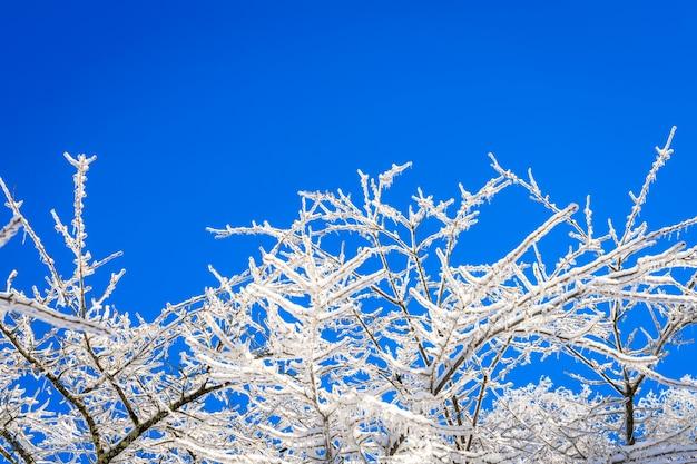 Árboles congelados en invierno con el cielo azul