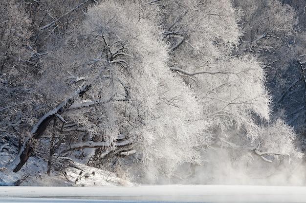 Árboles cubiertos de escarcha a orillas de un río helado