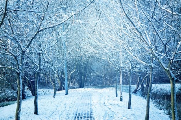 Árboles cubiertos de nieve