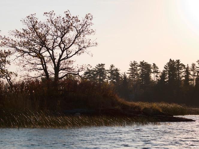árboles en la orilla del lago, lago de los bosques, ontario, canadá