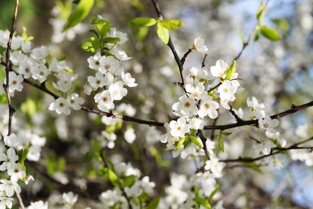 Árboles en flor en un jardín con reflejos florales y cielo en primavera y verano