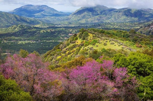 Árboles florecientes y colinas verdes en primavera