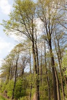 Árboles con follaje joven verde brillante