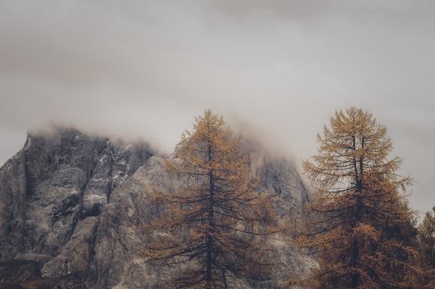 Árboles y formación rocosa bajo un clima brumoso