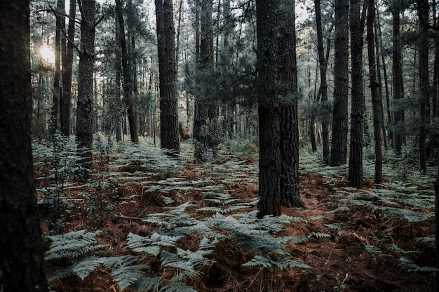 Árboles y helechos crecen en el bosque