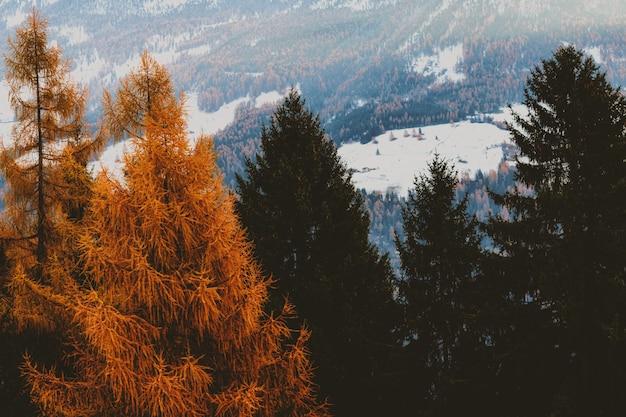 Árboles de hoja marrón y verde con campo cubierto de nieve en segundo plano.