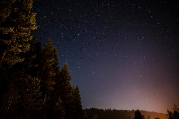 Árboles de hoja perenne vistos en la noche