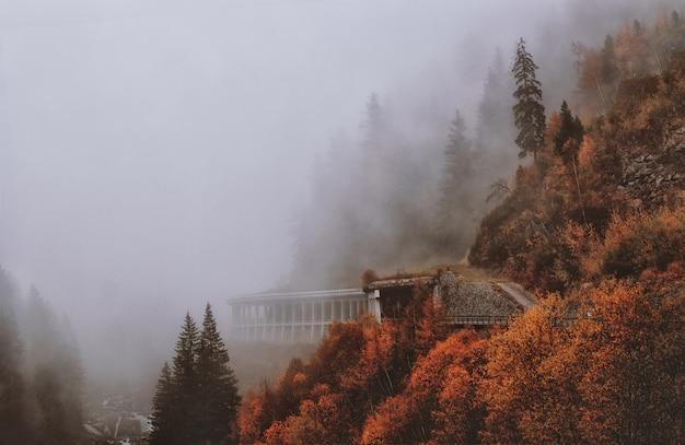Árboles con hojas marrones y verdes cubiertos de niebla