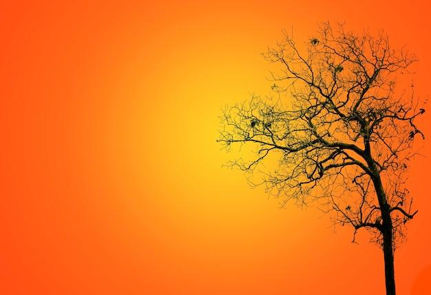 Árboles sin hojas en la oscuridad dejando una escena espeluznante; silueta de fondo de árbol de halloween aterrador en la parte posterior sobre fondo naranja.