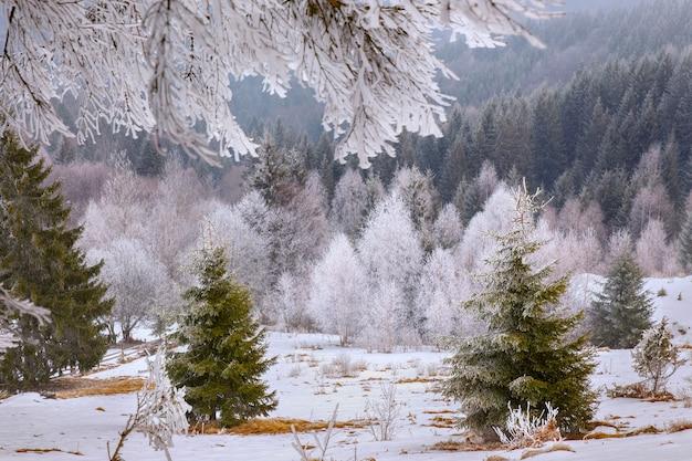 Árboles de invierno en la nieve