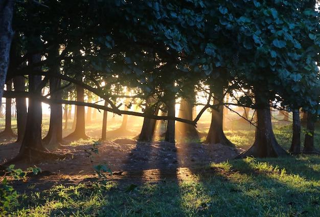 Arboles con luz de atardecer cálidos y suaves en la naturaleza.