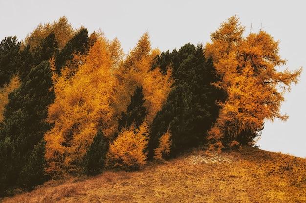 Árboles marchitos marrones y verdes sobre hierba marchita