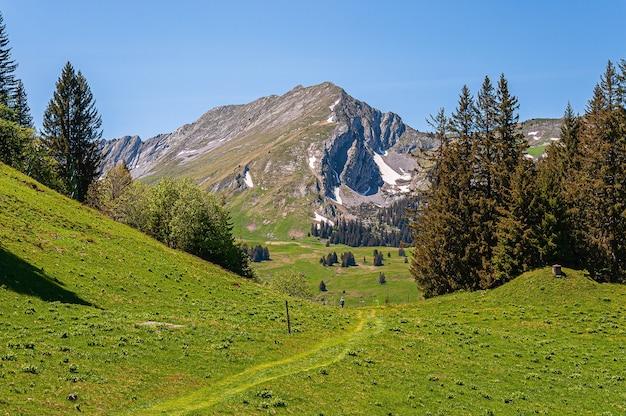 Árboles en las montañas de los alpes swizz en suiza