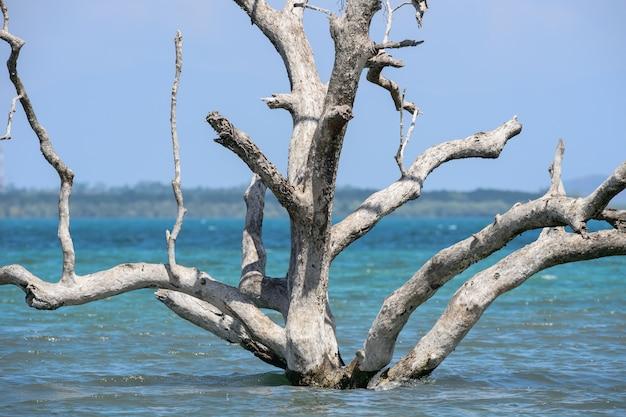 Árboles muertos en pie que murieron después del aumento del nivel del mar debido al calentamiento global