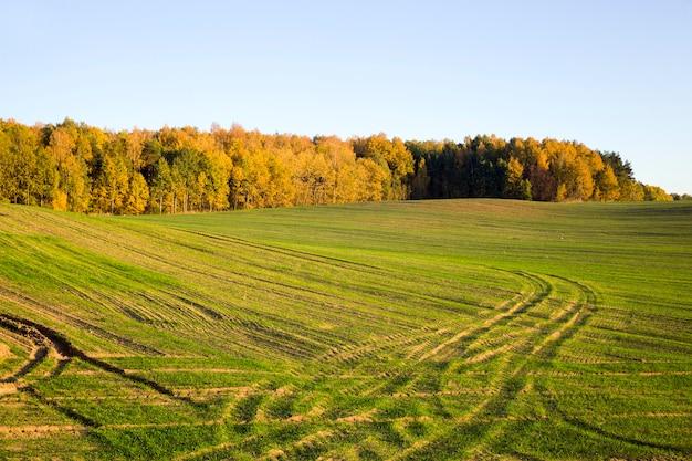 Árboles de otoño cerca del campo agrícola.