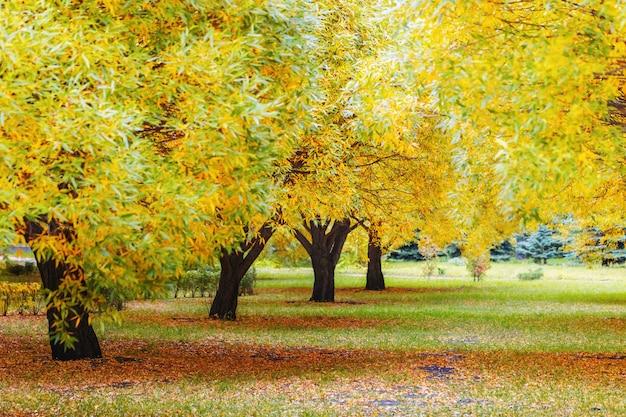 Árboles de otoño en el parque de la ciudad