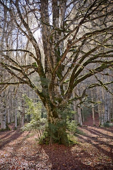 Árboles de otoño en el parque nacional de ordesa, pirineos, huesca, aragón, españa