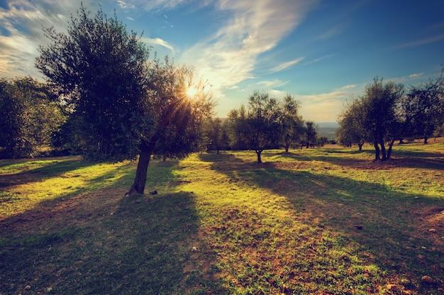 Árboles plantados en caminos de tierra