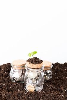 Árboles que crecen en monedas