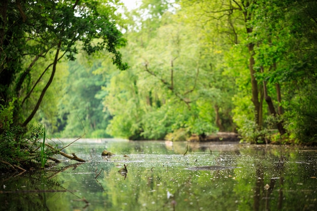 Árboles que rodean el agua durante el día.