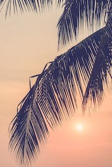 Árboles de sol hermosa playa de filtro