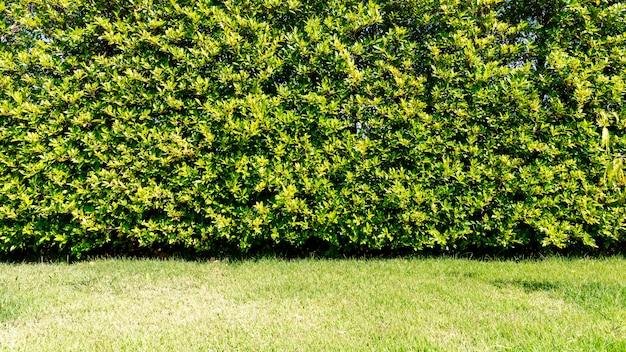 Árboles verdes frescos con hojas pequeñas cerca y pasto verde
