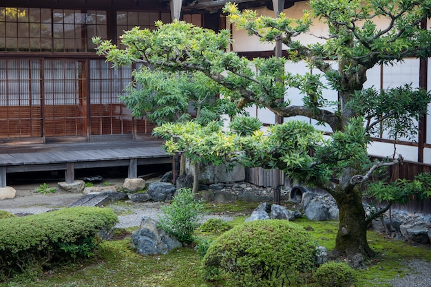 Árboles verdes naturales en un jardín japonés