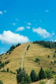 Árboles verdes y pista de tierra en la colina verde contra el cielo azul
