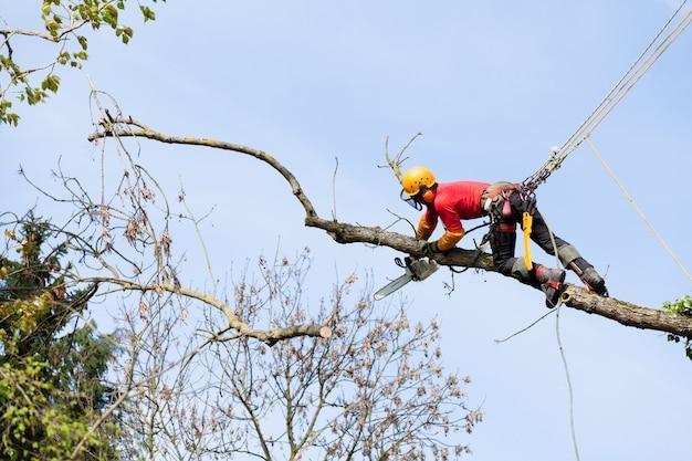 Un arborista cortando un árbol con una motosierra.