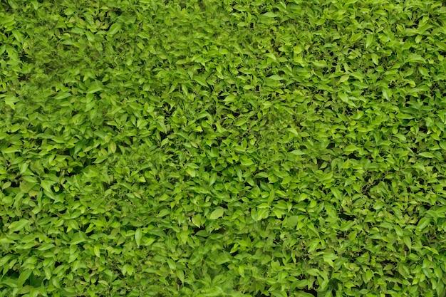 Arbusto de color verde brillante