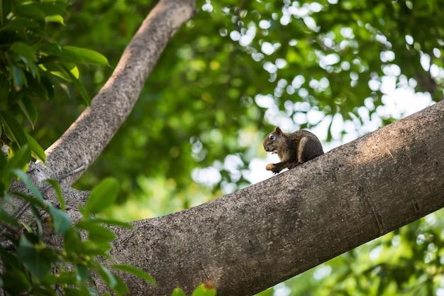 Ardilla comiendo maní en árbol