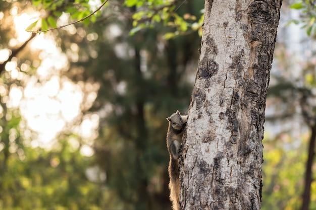 Ardilla en el tronco del árbol al amanecer