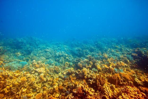 Área de arrecifes de coral