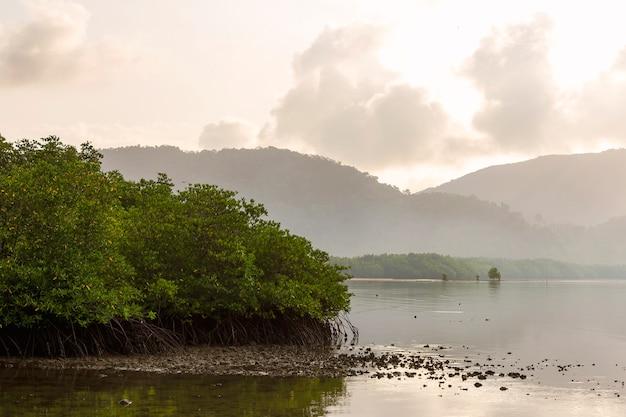 Área de manglares en la desembocadura del río con un fondo de montañas y nubes en la mañana.