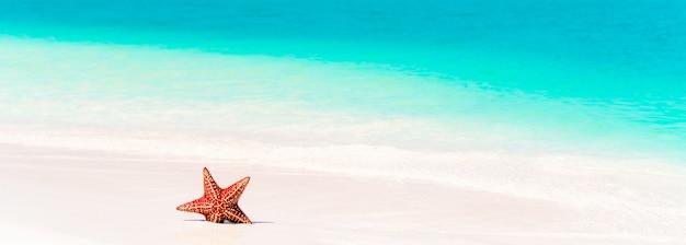 Arena blanca tropical con estrella de mar roja en agua clara